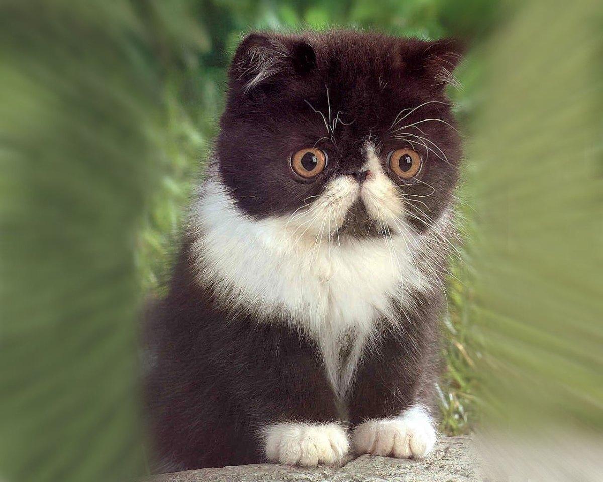 Cute_kitten